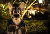 Night Yeen (Ice Foxx) Tags: 91e207427274e5 aardwolf fursuit hyena vancoufur vancoufur2018 vf2018 vfur2018