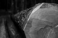 Arbre (c.bouvard) Tags: arbre forêt wood tree bokeh