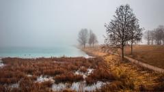 Foggy Morning 2 (joseph_donnelly) Tags: riem münchen munich park see lake trees fog foggy morning nabel