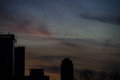 Always With You (cara zimmerman) Tags: birds dusk highlandpark sunset indianapolis