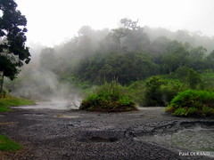 mist and smoke (paul derand) Tags: water forest rainforest mist geothermal