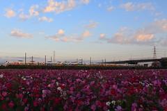 Kitty列車‧海線晨跑 (FormosaStar) Tags: