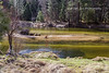 Merced River,  Yosemite National Park (PhotoDG) Tags: mercedriver river water yosemitenationalpark yosemite nationalpark yosemitevalley landscape color