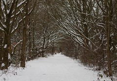 2018 march 18 snow sheffield shirebrook valley  (15) (Simon Dell Photography) Tags: tree tunnel path walk shirebrook valley park snow uk sheffield hackenthorpe s12 simon dell photography 2018 minibeastfromtheeast weather nature wildlife birds narnia winter wonderland spring march 18th