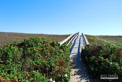Ocean Marshes at Sandwich, Cape Cod (Travel around Spain) Tags: cabocod capecod península massachusetts estadosunidos marismas