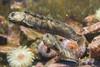 Poparia (José M. Arboleda) Tags: polaria anima acuático foca pez agua acuario zoológico edificio ártico tromso noruega canon eos 5d markiv ef24105mmf4lisusm josémarboledac