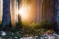 Woodland (frantiekl) Tags: forest trees fog light sunshine landscape winter snow nature walking sunlit relax silence relaxation wild bohemia