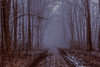 Occurs (JuliSonne) Tags: fog forest trees foliage road darkmood mood unknown ghostly thrill path
