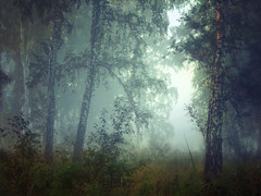 Morning forest (arthurverigin) Tags: mist morning mystery forest fog siberia russia birch twilight landscape obscurity ubravnets