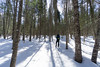 Rabbit Bay Ski - April 2018-10 (Nathan Invincible) Tags: rabbitbay forest winter skiing crosscountryskiing crosscountry snow keweenaw keweenawpeninsula michigan michigansupperpeninsula michiganskeweenawpeninsula upperpeninsula mi