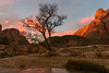 A Touch of Pink (CloudRipR) Tags: zionnationalpark rocks sunrise clouds pink red trees morning nikon nikkor d810