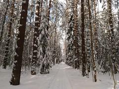 и снежные засечки на стволах чаруют