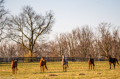 Horses of Kentucky (JuanJ) Tags: nikon d850 lightroom art bokeh nature lens light landscape white green red black pink sky people portrait location architecture building city iphone iphoneography square squareformat instagramapp shot awesome supershot beauty cute new flickr amazing photo photograph fav favorite favs picture me explore interestingness wedding party family travel friend friends vacation beach kentucky horse animal fayette county bluegrass usa march 2018 thoroughbred farm