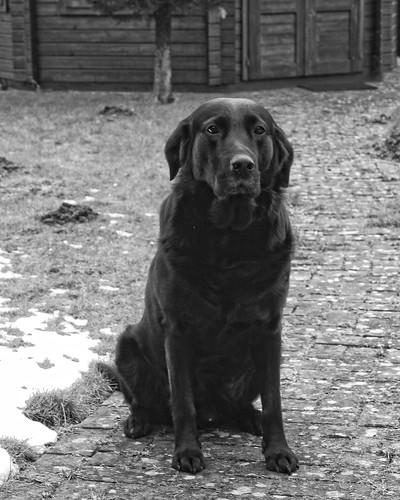 20180401-175902 Black Dog Easter Bokeh