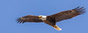 Bald Eagle TRACEN April 6-3 (Ed Ellington) Tags: yorktown virginia unitedstates us