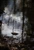 easter sunday 2018 umstead park 11 (furrycelt) Tags: nikon85mmf14afd nikon85mmf14 northcarolina umsteadstatepark beechleaves beechtree eastersunday ianwilson jianwilson photographersoftumblr 85mm d600 nikon raleigh umstead beech forest furrycelt lensblr marcescent natural nature reflection rock trees water woods