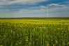 Canola and wind fields (oskaybatur) Tags: landscape april sky spring pentaxkr justepentax pentaxart 2018 oskaybatur türkiye trakya turkey turkei windturbine canolafield kanola sigma1770 nisan ilkbahar değirmenköy