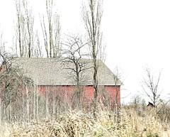 Oldest (robinlamb1) Tags: landscape barn tree trees grass highkey