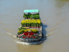 Cargo boats carry flowers on river (phuong.sg@gmail.com) Tags: activity amazing asia asian atmosphere ben boat busy can canal chanel color colorful colour crowd crowded day delta farmers flea float floating group landscape landscaping lively market mekong open people person river row rowing scene soc sunny tho trade trang travel tre vietnam vietnamese water wooden