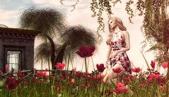 Keep love in your heart. A life without it is like a sunless garden when the flowers are dead. (desiredarkrose) Tags: flowerfield flowers bloom bloomevent deaddollz woman blonde lamb lyrium pose secondlife fashionblog virtualphotography virtualworld sl slfashion