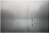 Lakeside (picturedevon.co.uk) Tags: paignton torbay englishriviera devon mist fog morning lake water spring outdoors weather minimal landscape fineart color trees woods canon wwwpicturedevoncouk