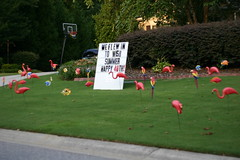 American Practical Joke - Plastic Lawn Flamingos (nickgraywfu) Tags: americana 30041