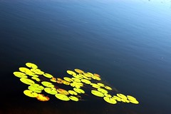 DSC_3531 (day4coffee) Tags: lake mountains green nc northcarolina gradient lillies lillypad basslake blowingrock