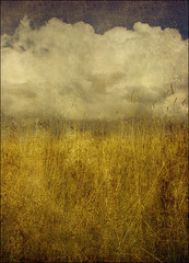 . 6 Studies From Magog Down . Pt.3 - The Midst Of Grasses . (3amfromkyoto) Tags: blue sky cloud grass yellow clouds gold golden magog down grasses six cambridgeshire studies pt3 midst magogdown 3amfromkyoto flickr:user=3amfromkyoto