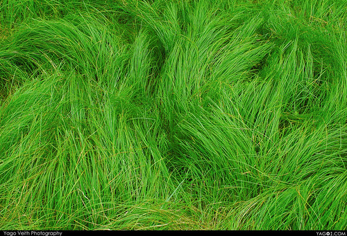 Radioactive Grass (PS#2)