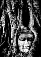 Stuck (... Arjun) Tags: bw 15fav monochrome 1025fav 510fav thailand trapped nikon bravo asia stuck fig buddha buddhist d70s buddhism 2006 unescoworldheritagesite 1870mmf3545g 2550fav 500v50f 50100fav wedged fixed 1000v100f caught puzzled ayutthaya stumped immovable jammed baffled watphramahathat watmahathat mystified 76points bluelist 100200fav havingdifficulties withoutananswer atacompleteloss 200500fav