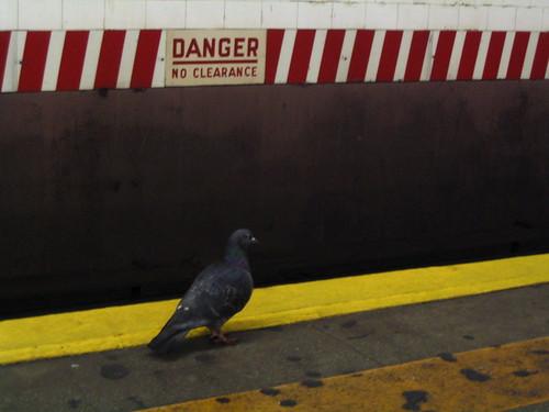 pidgeon in subway