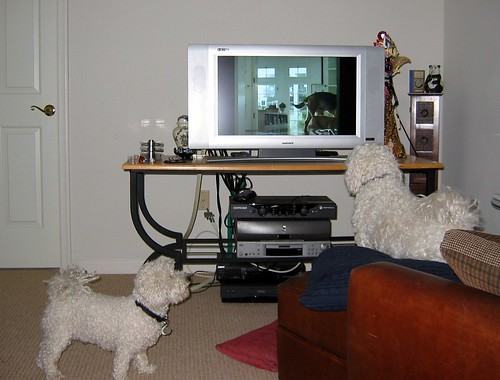 Cameron barking at a dog on TV by garyhymes