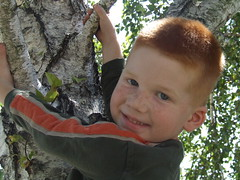 AJ in a tree