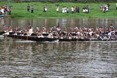 The race (Renju George) Tags: summer people festival colorful kerala celebration fancy onam boatrace pamba aranmula vallamkali uthruthathi chundanvallam onapattu