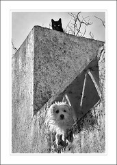 Black Cat White Dog (Alex Guerra) Tags: bw dog white black portugal look lines wall cat furry geometry pair kitty devil personalities staring peeking marvo introvert extrovert alexguerra gettyimagesiberiaq3