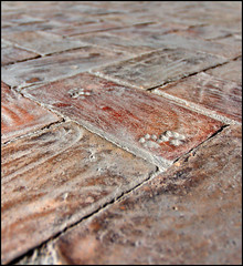 Cat footstamps on ancient red bricks New