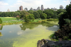 NYC - Central Park: Turtle Pond (wallyg) Tags: park nyc newyorkcity ny newyork skyline nhl pond centralpark manhattan landmark gothamist greatlawn turtlepond nationalhistoriclandmark nationalregisterofhistoricplaces belvederelake usnationalhistoriclandmark nrhp natureblind usnationalregisterofhistoricplaces newyorkcitylandmarkspreservationcommission nyclpc sceniclandmark
