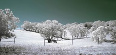 (splendor-solis) Tags: sky nature animals digital landscape ir nikon d70 nikond70 infrared southaustralia hoya r72 hoyar72 falsecolours