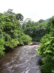 / A Maliau Tributary (Tianyake) Tags: rainforest malaysia borneo tropical remote sabah biodiversity  tributary maliau superbmasterpiece 1on1naturephotooftheweek  1on1naturephotooftheweekjanuary2008 maliauriver    maliautributary