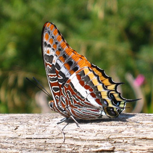 Exotic Butterflies Pictures