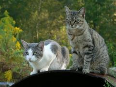 Gerbil and Sabrina #2 - 10/5/06 (robert_rvnwd) Tags: sabrina gerbil brina