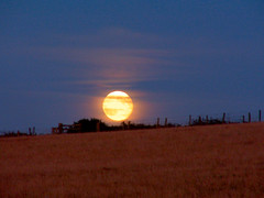 Harvest Moon Rising - by Ennor
