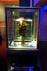 Eternal Spring: Sunflowers II (Arenamontanus) Tags: london sunflowers installation marcquinn londonsciencemuseum cryonics