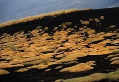 Etna (fiumeazzurro) Tags: 123 natura sicilia 1on1 trinacria scoreme mnfg commentscomments isawyoufirst