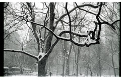 Madison Square Park (Marcus Woollen) Tags: snow newyork timessquare blizzard canonetgiiiql17