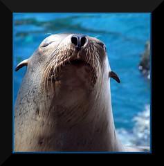 I can see up his nose (tammyjq41) Tags: world sea orlando bravo florida 2006 explore tjs tjd specanimal animalkingdomelite abigfave exploreatlantazoo