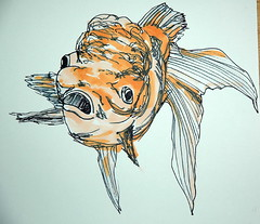 (frederick//H) Tags: orange illustration gold aquarium sad goldfish