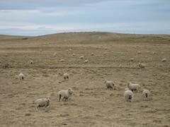 Patagonia - 030.jpg (numberjuan2) Tags: ushuaia headed toward