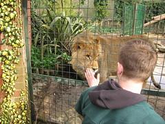 IMG_6653 (Rob Igo Photography) Tags: zoo lion cage scoopt