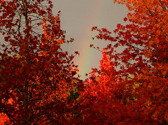 Color, Color and More Color! (shesnuckinfuts) Tags: autumn red sky fall colors leaves washington rainbow autumnleaves wastate coolest kentwa bonza october2006 saywa experiencewa shesnuckinfuts autumninwa washingtonstateoutdoors autumnrainbow wacatuc